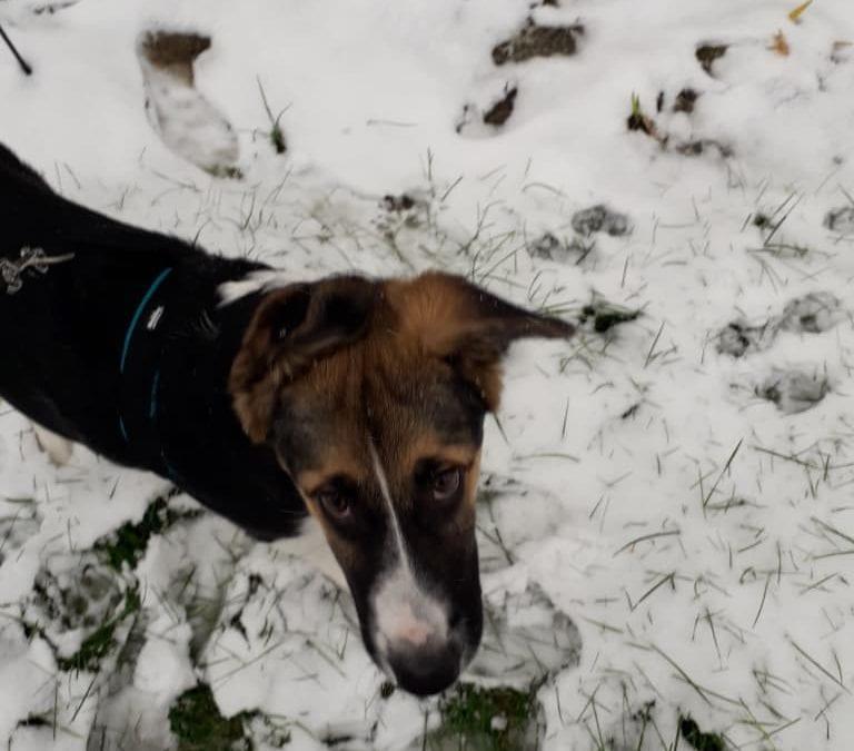 Hunde Foto: Rosemarie und Balto – Schnee ist interesannter, weißt du??? 😚😎