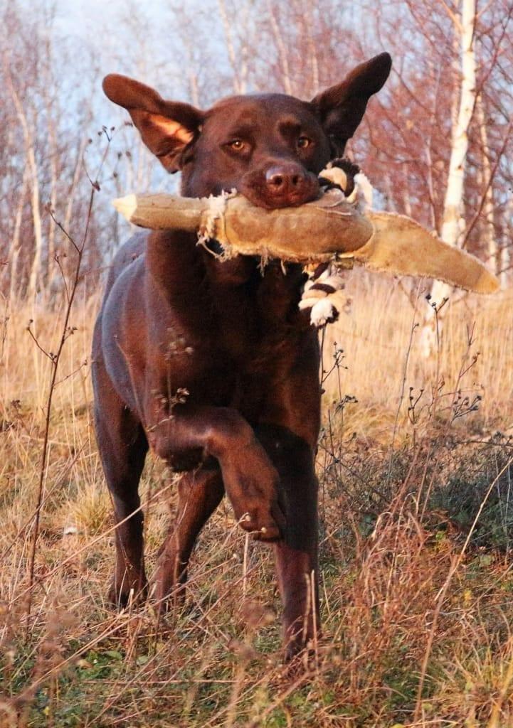Hunde Foto: Anne und Carlos - Spaß beim Dummy