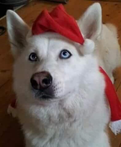 Hunde Foto: Hinterleitner und Suky - Schneebrinzessin
