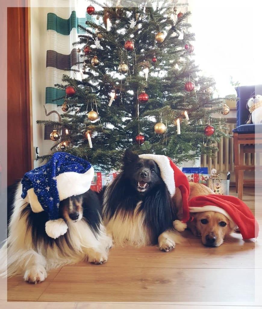 Hunde Foto: Klaus-Dieter und ROBBY, GRACE, HAPPY - Weihnachten