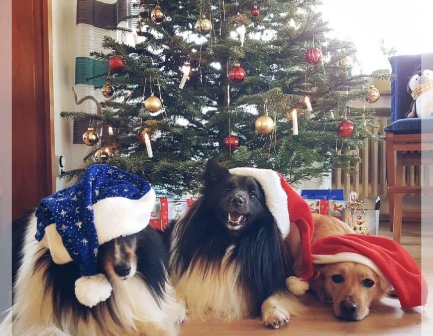 Hunde Foto: Klaus-Dieter und ROBBY, GRACE, HAPPY – Weihnachten