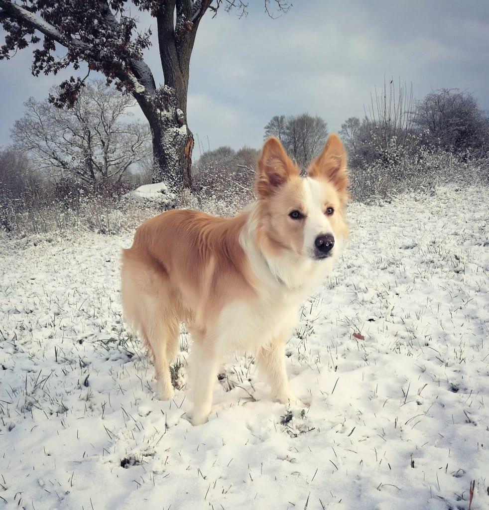 Hunde Foto: Kira und Lenny - Schneeeee