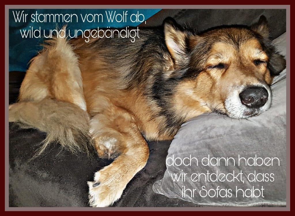 Hunde Foto: Micha und Mogli - Erkenntnis 🐶