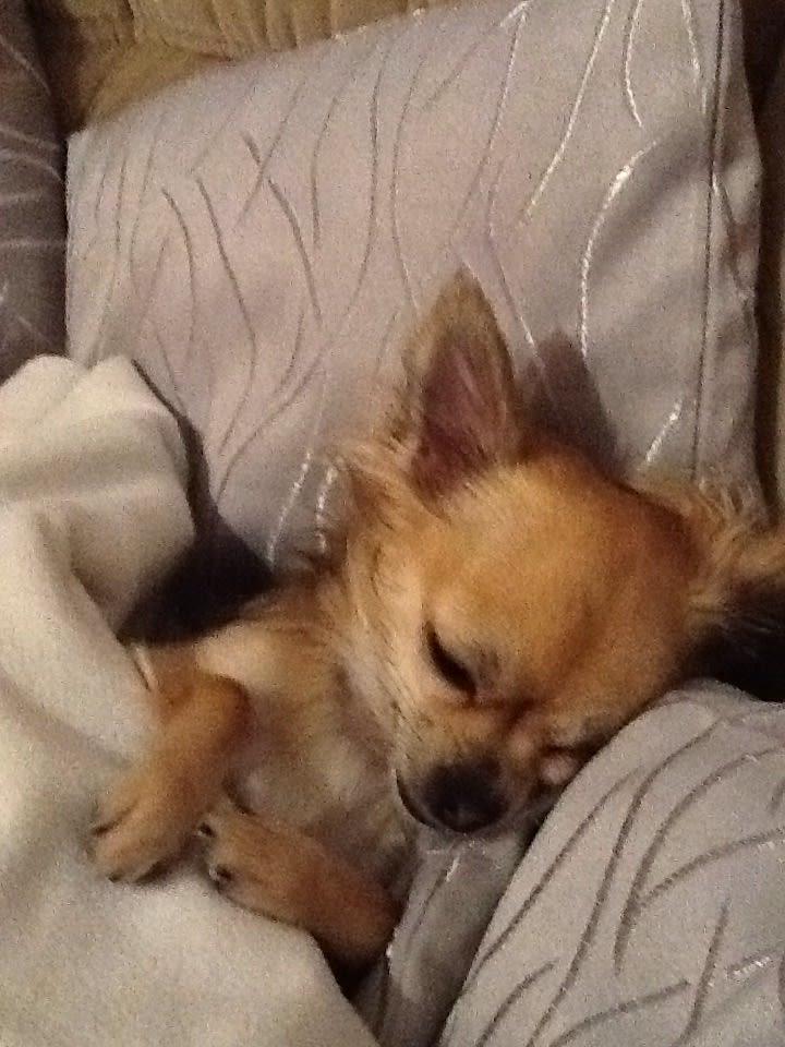Hunde Foto: Coriane und Drömy - Schlafmützchen