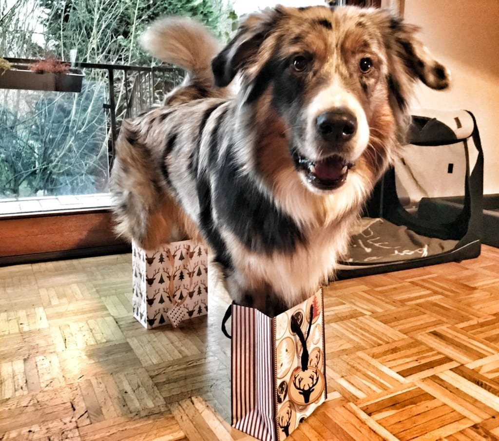 Hunde Foto: Micjelle und Ace - Doggy in a Box