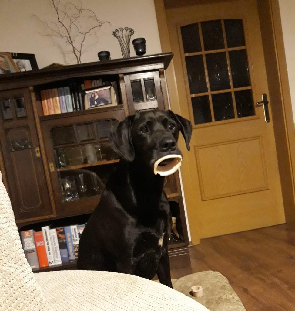 Hunde Foto: Daniela und Max - Ich liebe diesen Blick 😍