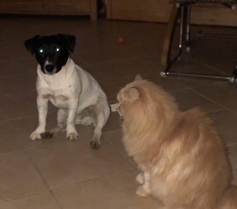 Hunde Foto: Hartmut und Felix – Zwei Freunde