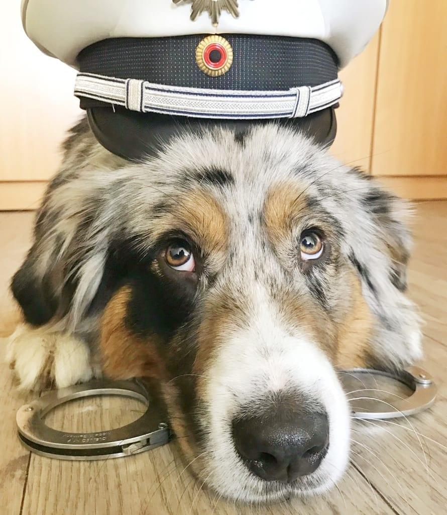 Hunde Foto: Michelle und Ace - Policedog in Ausbildung