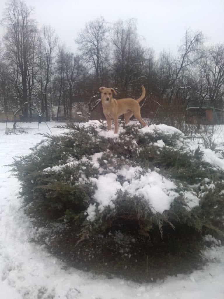 Hunde Foto: Jana und Lusy - Ich und mein Baum...