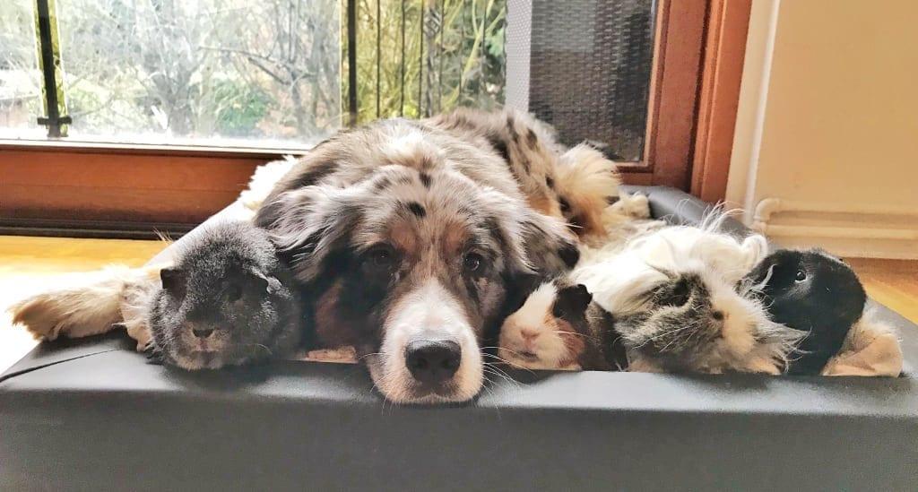 Hunde Foto: Michelle und Ace - Ace und seine Freunde