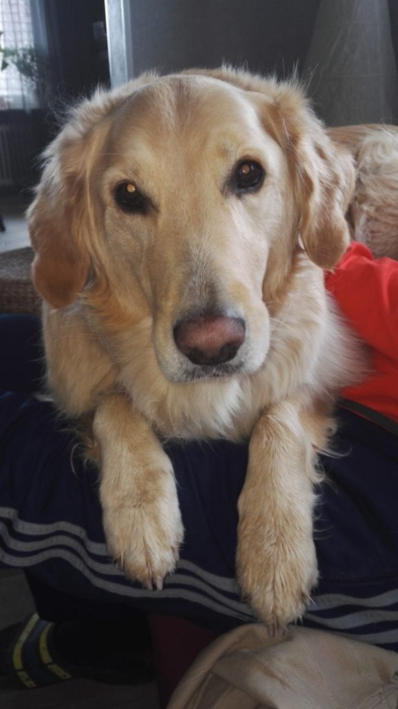 Hunde Foto: Renate und Sammy - Sammy liebt sein Herrchen💖