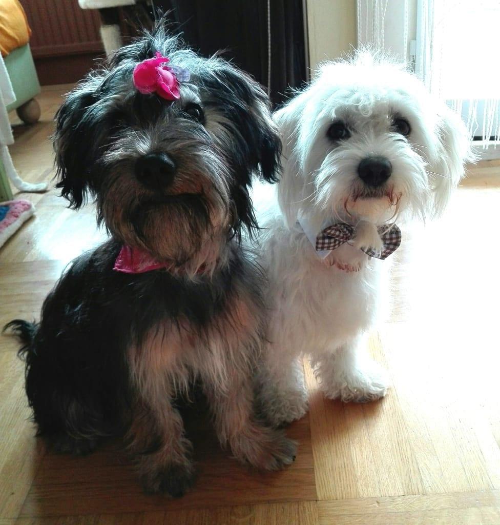 Hunde Foto: Andrea und Luzia & Snoopy - Bond, James Bond