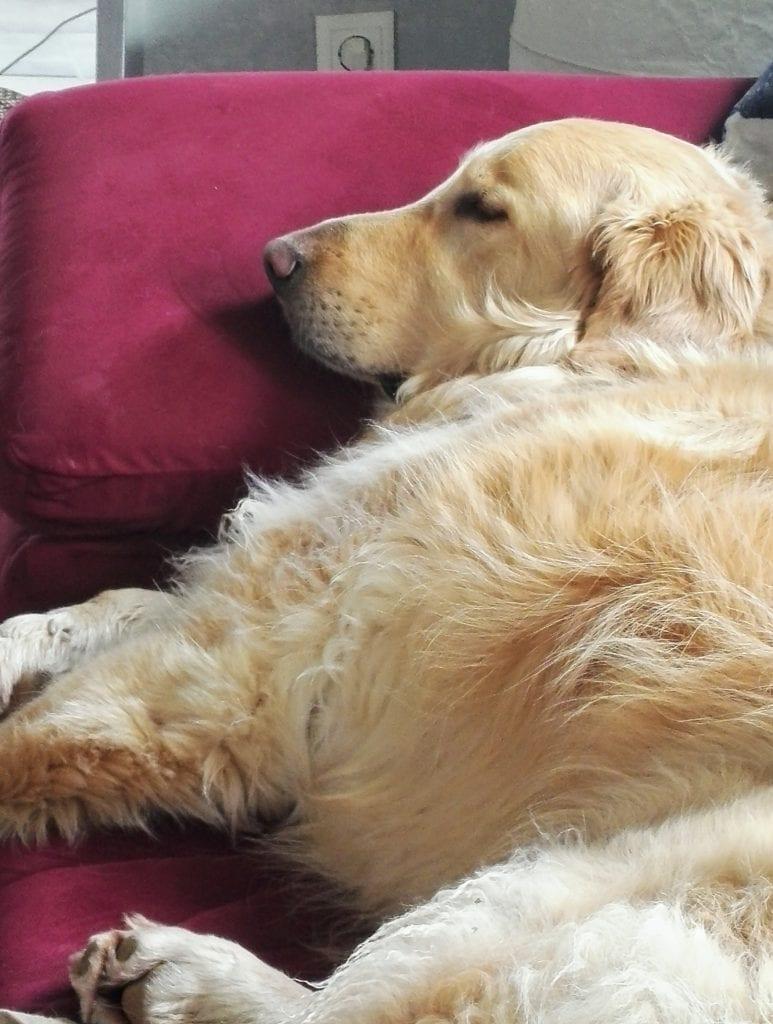Hunde Foto: Renate und Sammy - Hundemüde💤