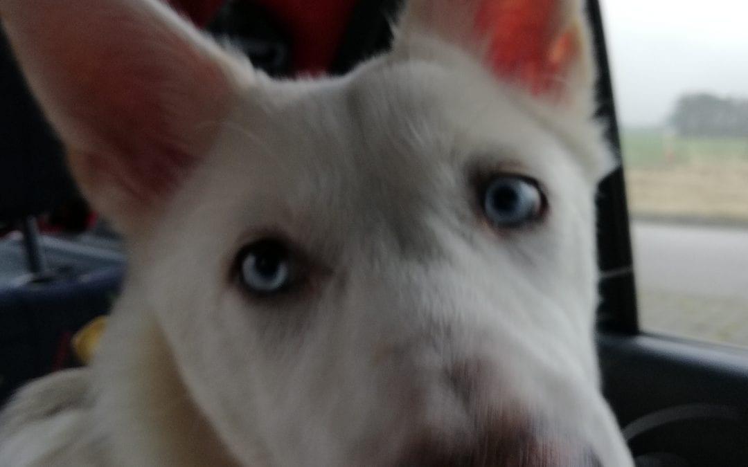 Hunde Foto: Nicola und Stella – Unser Neuzugang