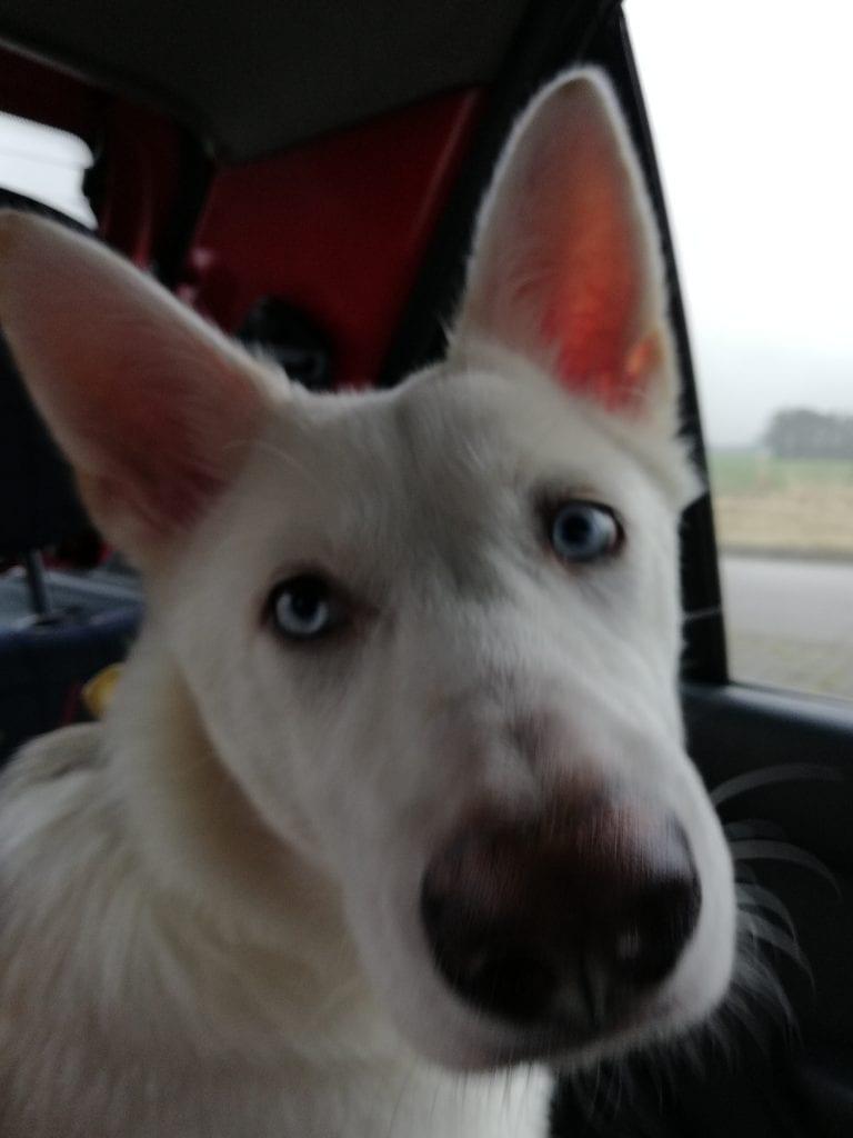 Hunde Foto: Nicola und Stella - Unser Neuzugang