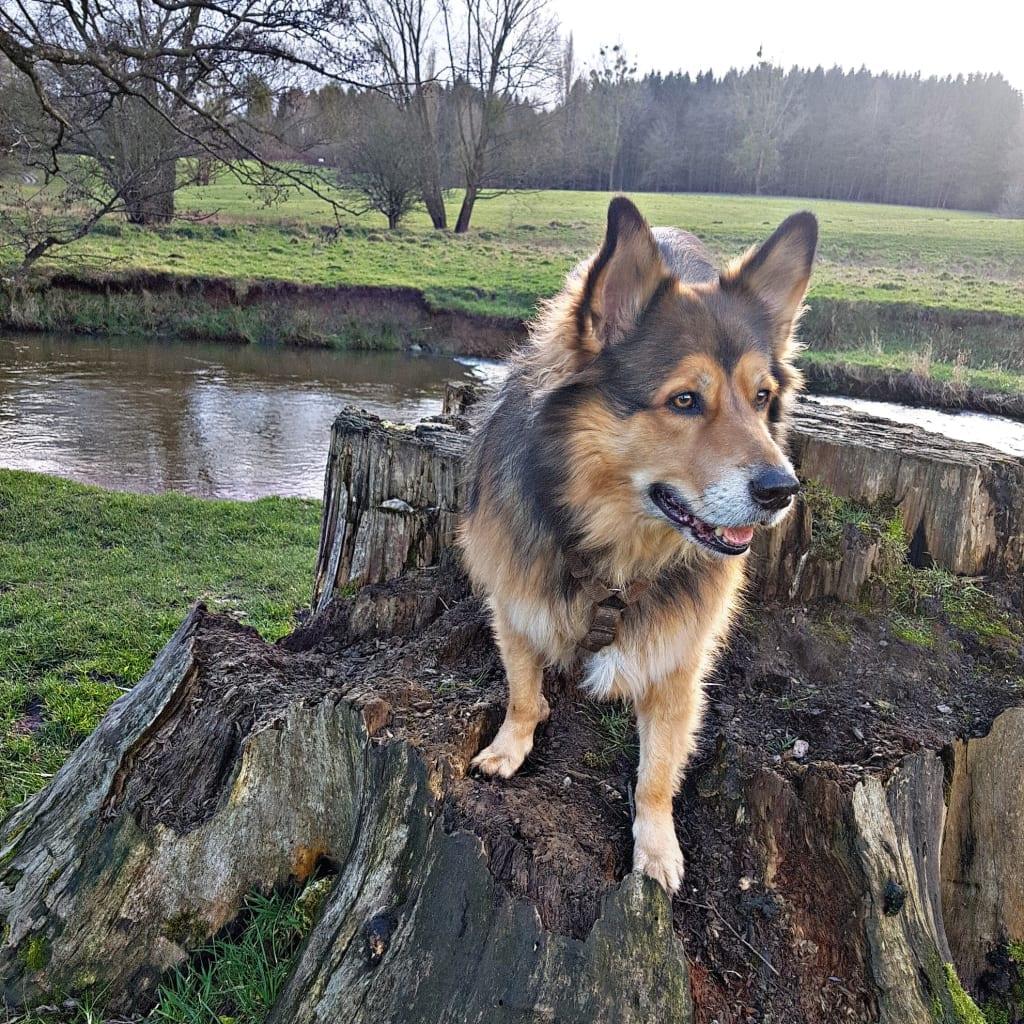 Hunde Foto: Micha und Mogli - Matsch Gassi
