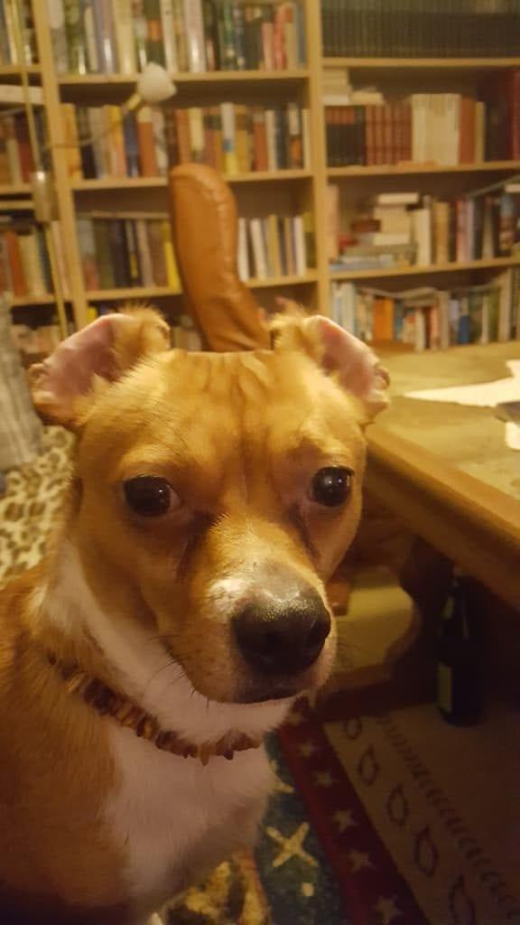 Hunde Foto: Thorsten und Milow - Lustige Aufwachphase !!!