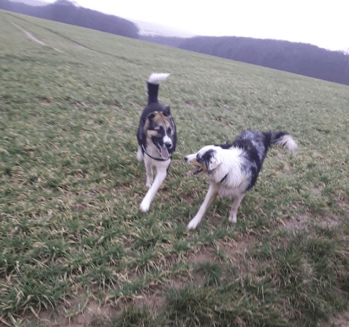 Hunde Foto: Rosemarie und Balto – Balto und sein girlfriend Mika 😍