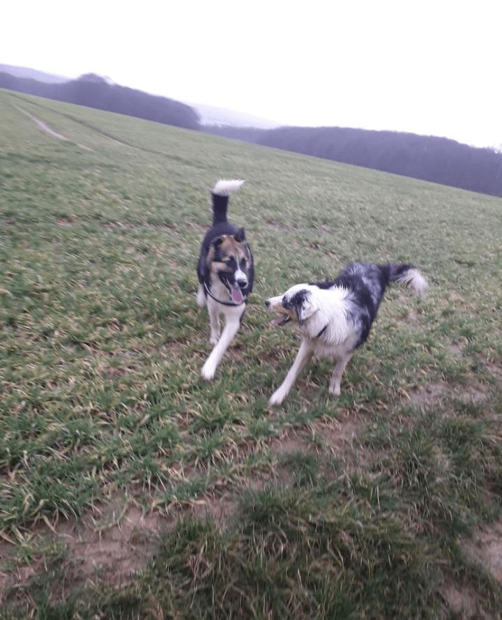Hunde Foto: Rosemarie und Balto - Balto und sein girlfriend Mika 😍