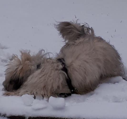 Hunde Foto: Susanne und Linus - Die Suche im Schnee