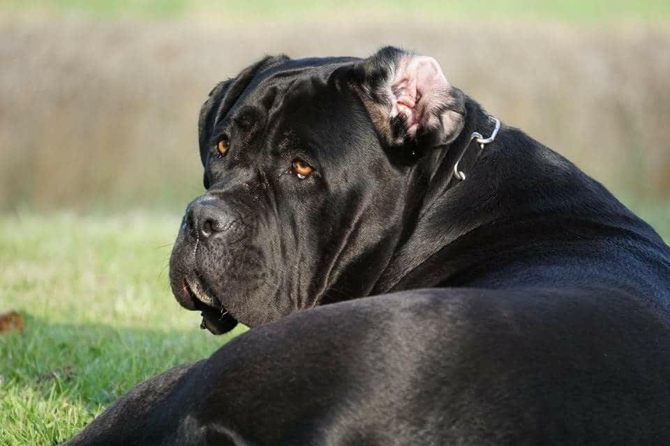 Hunde Foto: Sabine und Laya - Black Beauty