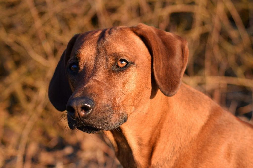 Hunde Foto: Larissa und Nala - Model