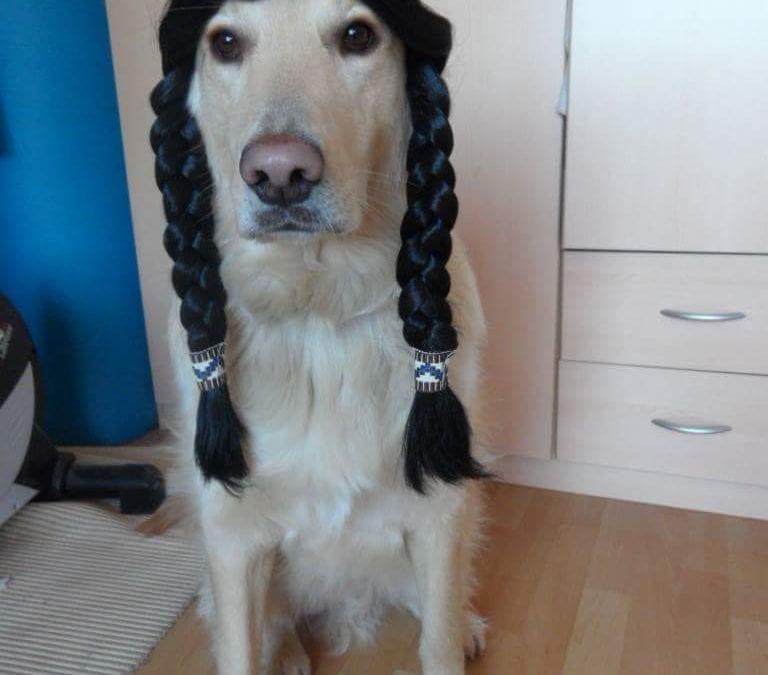 Hunde Foto: Renate und Sammy – Helau 🙂