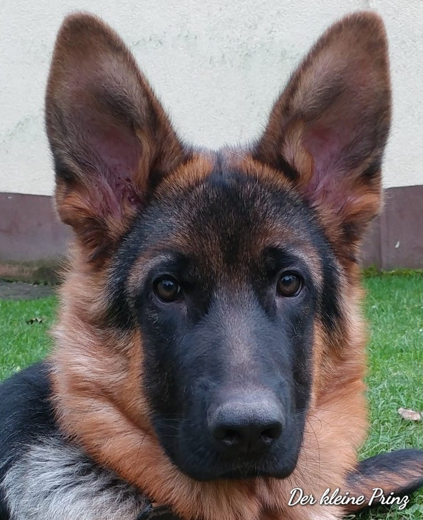 Hunde Foto: Peter und MAX WEBER - Paul' s  Geschenk für Peter
