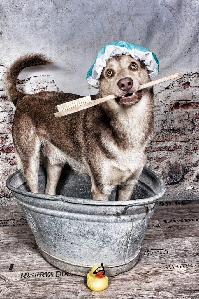 Hunde Foto: Steffi und Gizmo - Waschtag