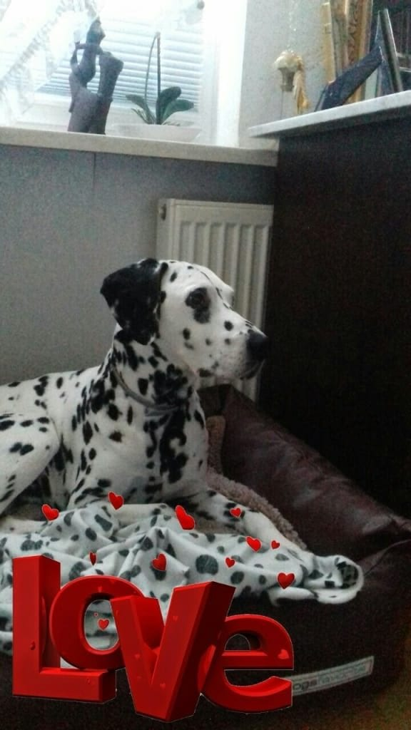 Hunde Foto: Dagmar und Pierrot - Mein kleiner Krankenwächter! 💙💙💙