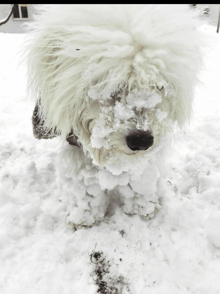 Hunde Foto: Anny und Snoopy - Naturkatastrophe hat Hund verschlungen
