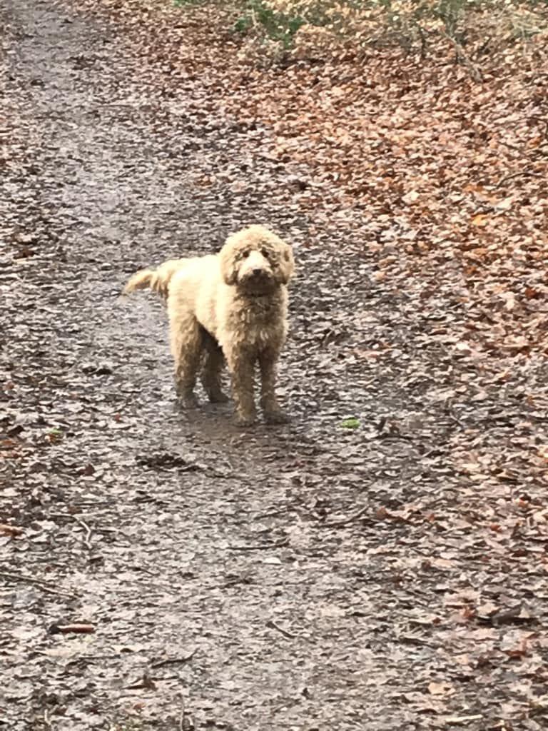 Hunde Foto: Sonja und Vally - Ein schöner Herbsttag