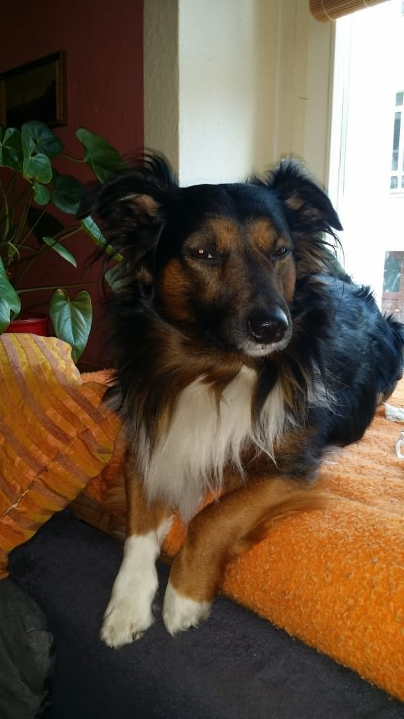 Hunde Foto: Silvia und Gerry - Unser Prinz
