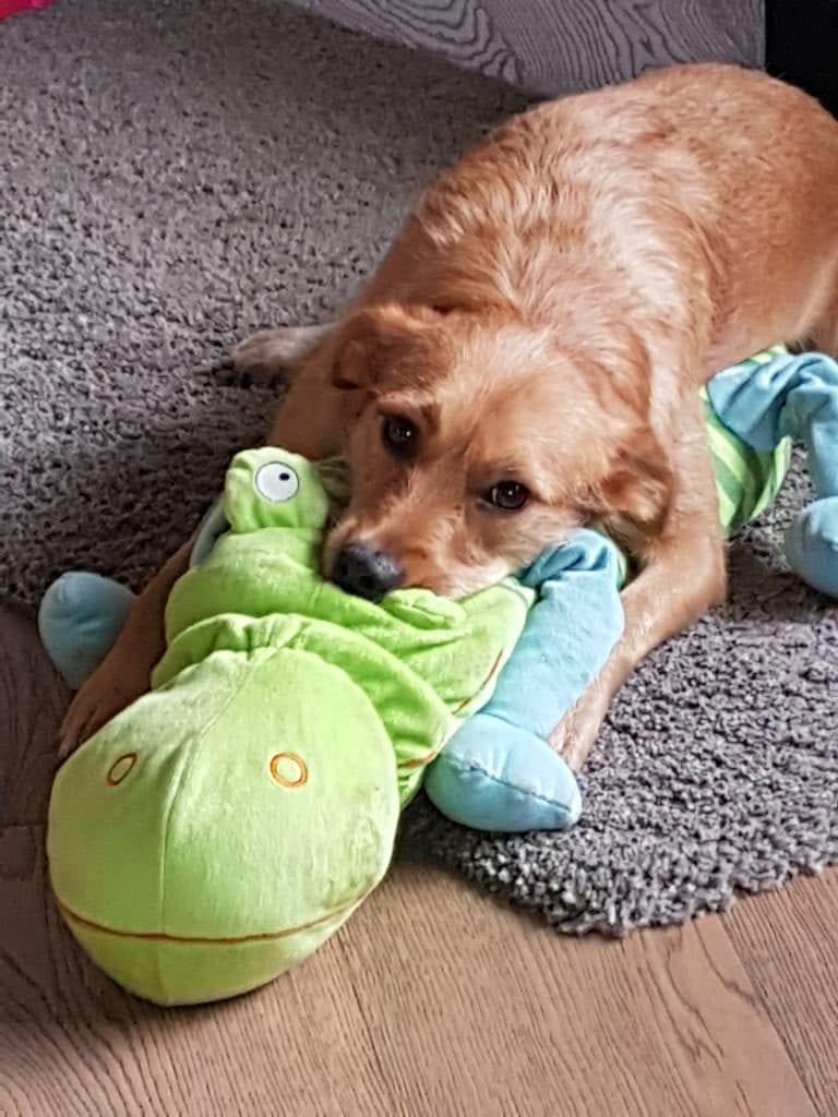 Hunde Foto: Claudia und Jule - Chillen