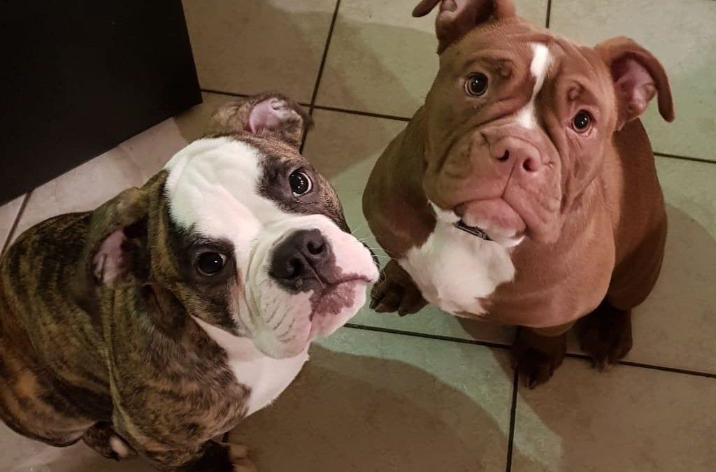 Hunde Foto: Christin und Emma & Te Amo – Pat und Patterchen