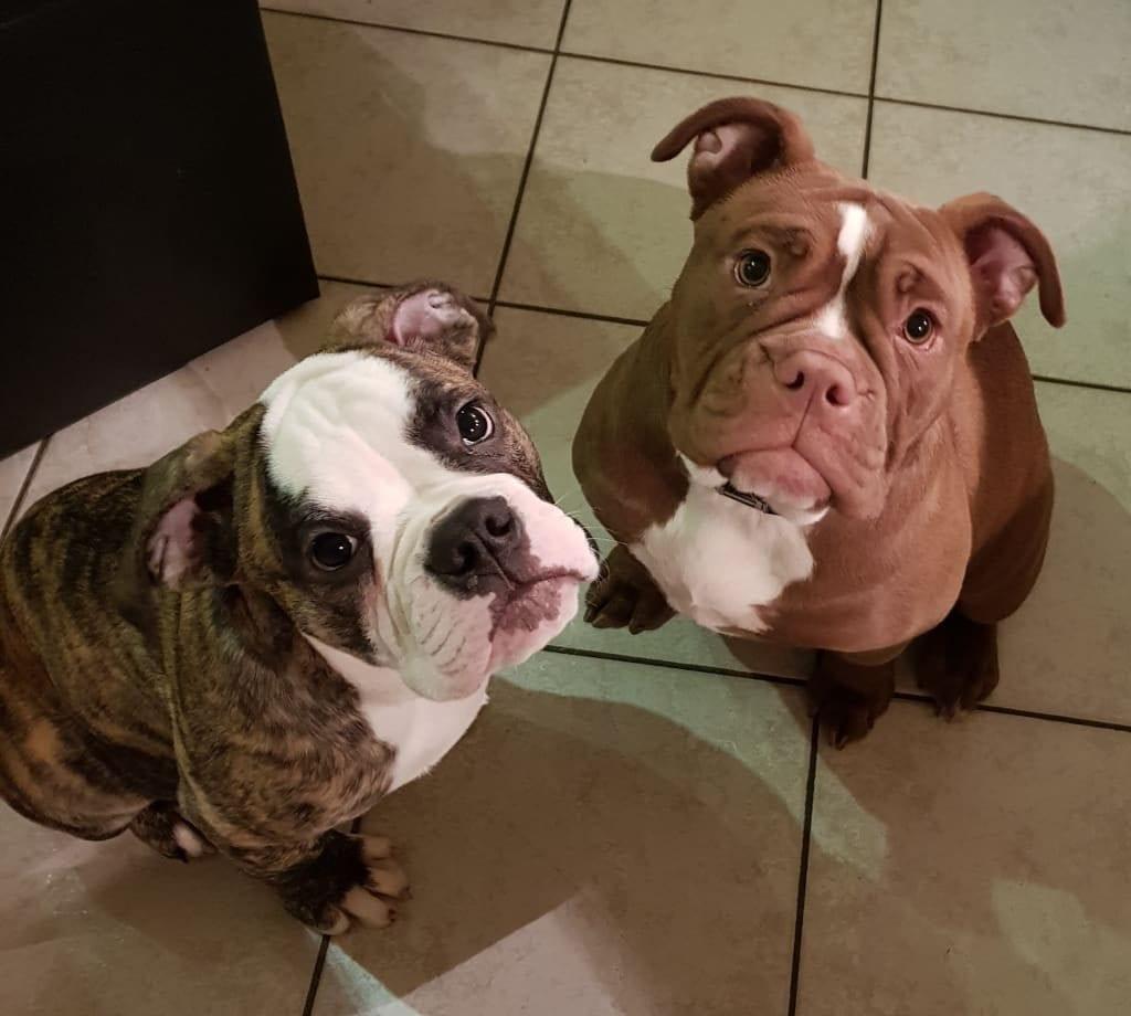 Hunde Foto: Christin und Emma & Te Amo - Pat und Patterchen
