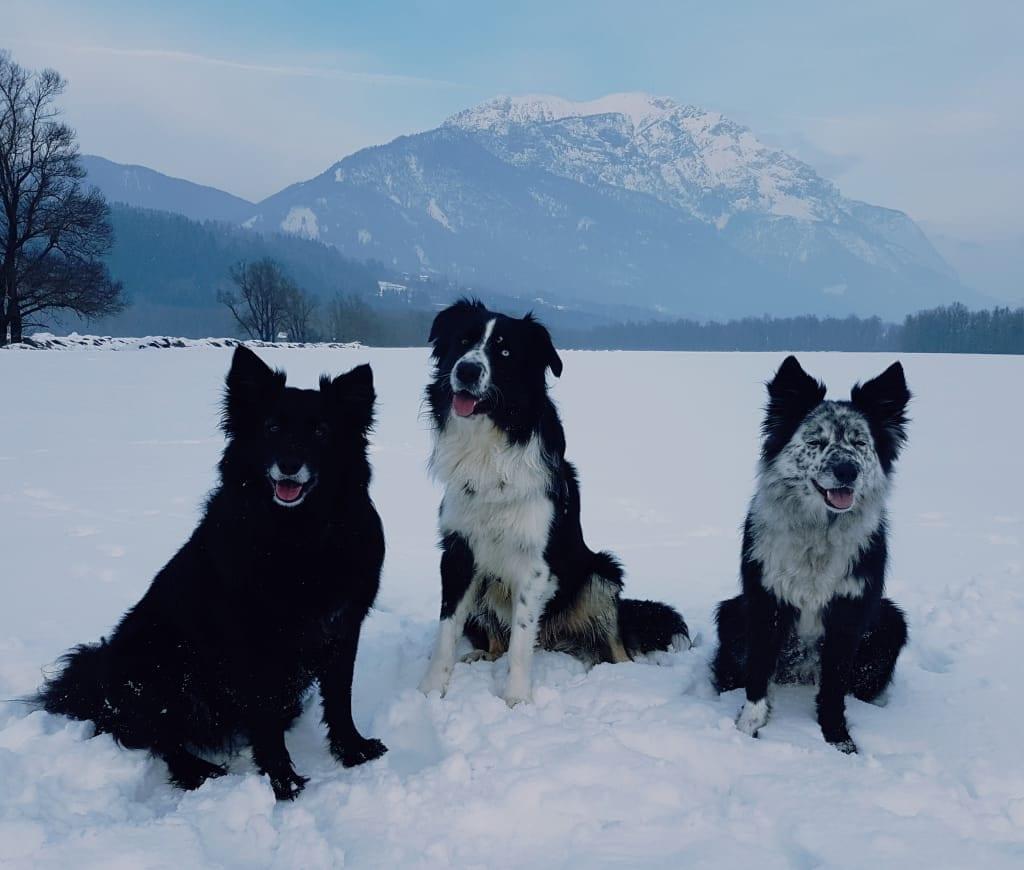 Hunde Foto: Alexandra und Kiki - King - Kira - just smile 😁