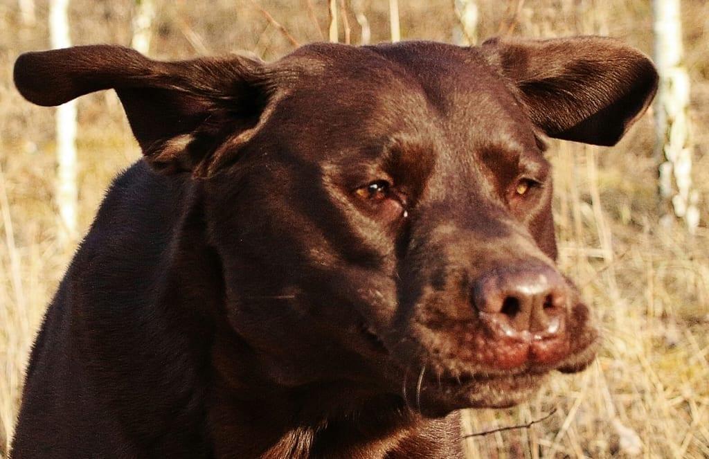 Hunde Foto: Anne und Carlos - Montag