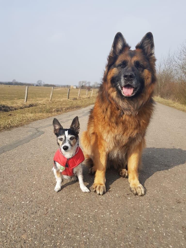 Hunde Foto: Petra und Grace und Kiwi - Friends