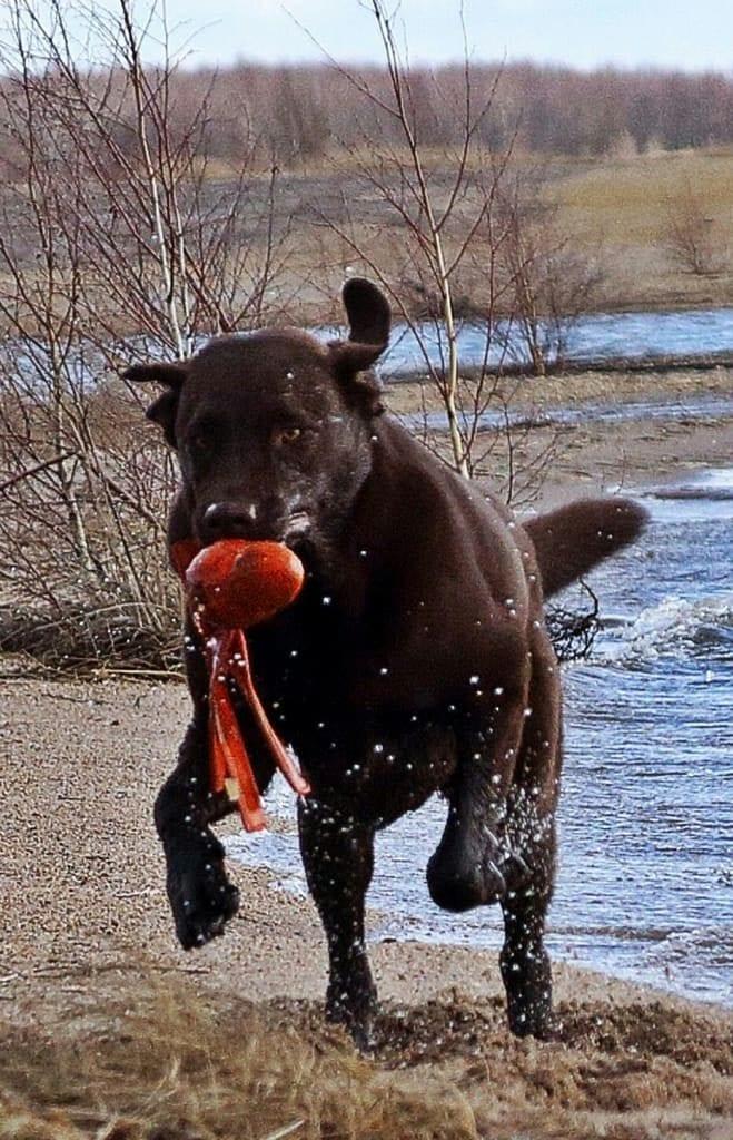 Hunde Foto: Anne und Carlos - Badespaß