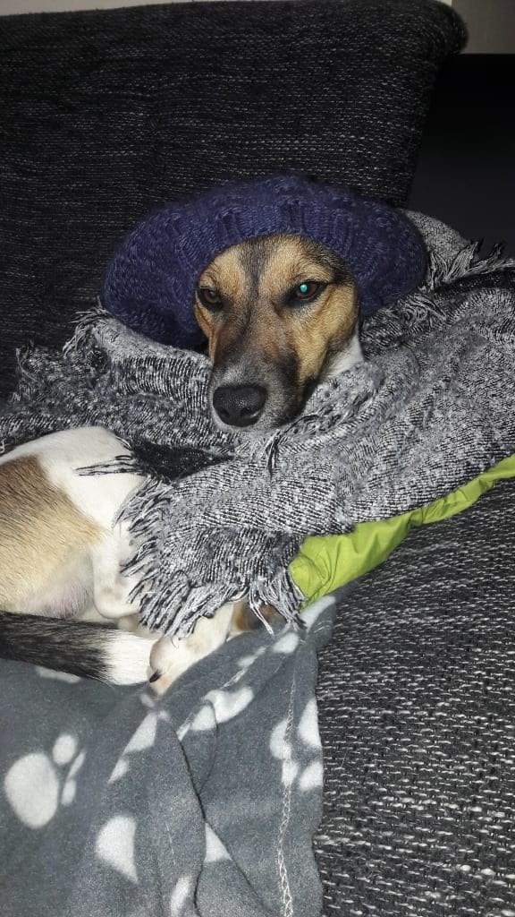 Hunde Foto: Anja und Harley - Wo bleibt der Frühling 😃