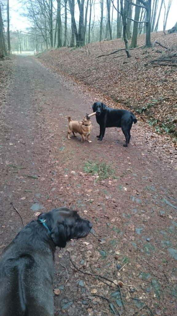 Hunde Foto: Daniela und Jack und Berti - Meiner