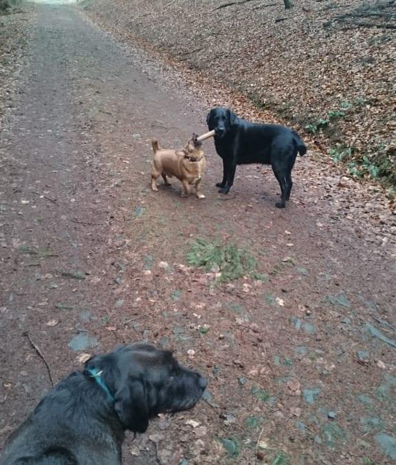Hunde Foto: Daniela und Jack und Berti – Meiner