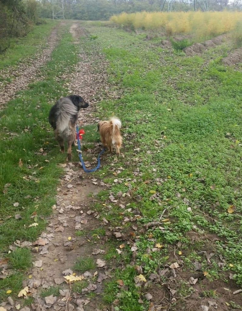Hunde Foto: Karina und Luna - Luna führt ihren kleinen Freund aus.