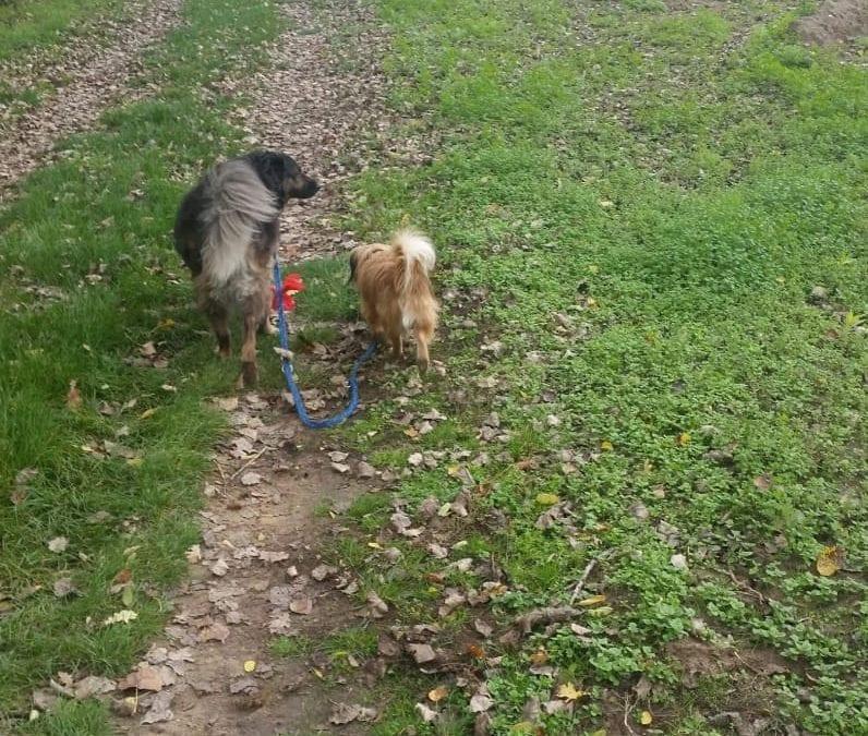 Hunde Foto: Karina und Luna – Luna führt ihren kleinen Freund aus.