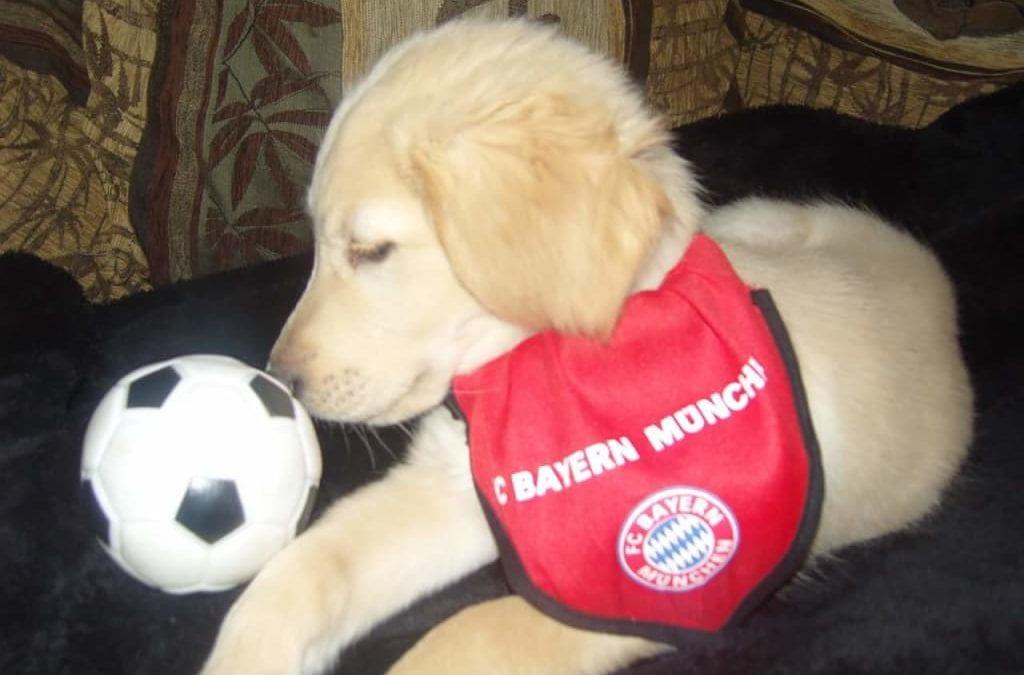 Hunde Foto: Renate und Sammy – Sammy unser Bayern Fan 🙂
