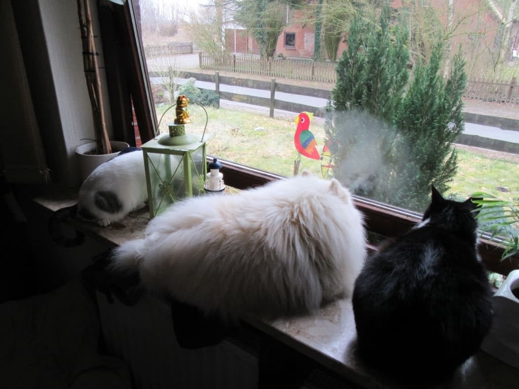 Hunde Foto: Hugo und Angelo, Loona und Linus - Neugierig? Wir doch nicht!!!