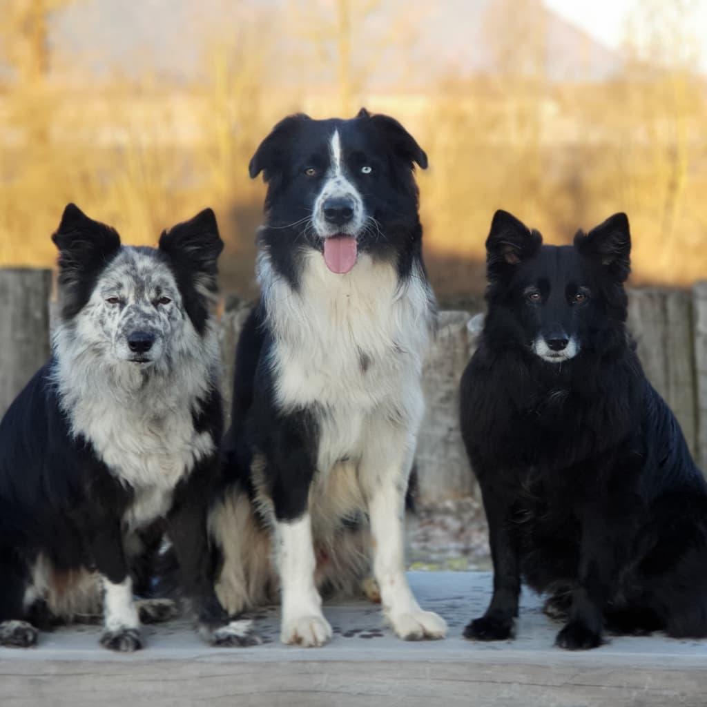 Hunde Foto: Alexandra und Kira - King - Kiki - meine Lieblinge 😍💜🐾