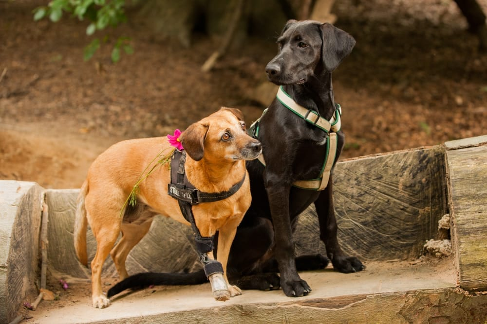 Hunde Foto: Kath und Fiasko & Noroc - Love is in the Air