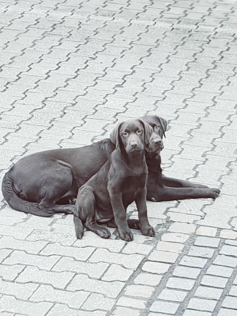 Hunde Foto: Sabrina und Mia (5 Jahre) Liese (4 Monate) - 2 neue beste Freunde